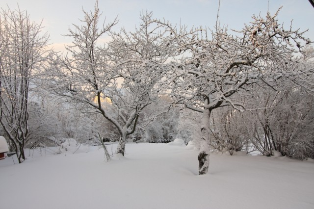 vinterpåtomten